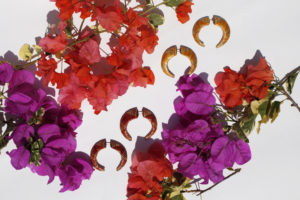 MINI CRESCENT HOOP EARRINGS MADE WITH THE ENCHAPE EN TAMO TECHNIQUE FROM PASTO IN A TROPICAL SETTING OF PINK AND PURPLE BUGAMBILIA